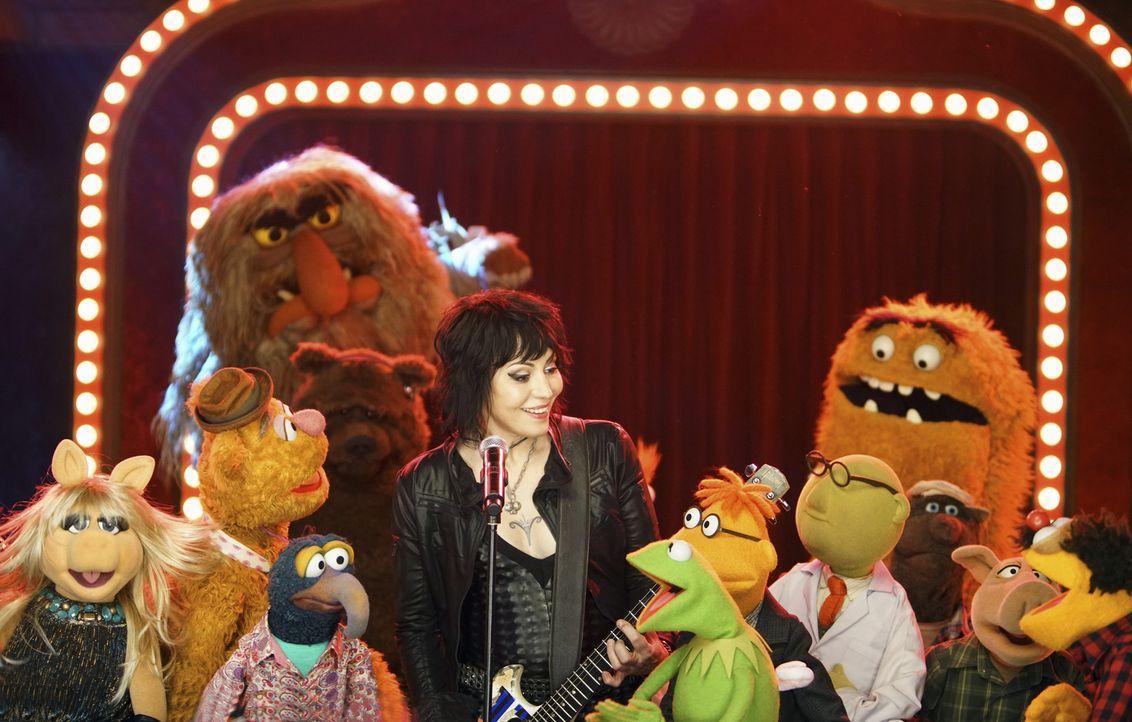 Die Muppets und Joan Jett (M.) stellen ihr Können unter Beweis ... - Bildquelle: Andrea McCallin ABC Studios