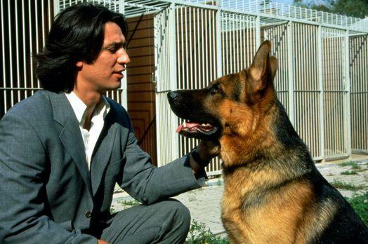 Während der Verfolgung eines Attentäters wurde der Hundeführer des Polizeihun...