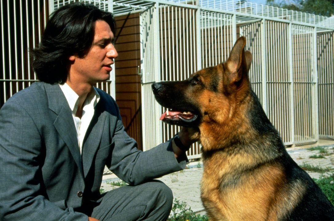 Während der Verfolgung eines Attentäters wurde der Hundeführer des Polizeihundes Rex erschossen: Seit dieser Zeit verweigert der Schäferhund jeglich... - Bildquelle: Ali Schafler Sat.1