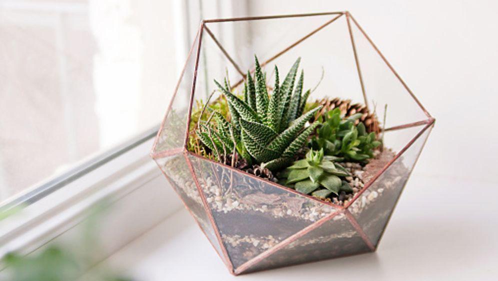 terrarium f r zimmerpflanzen diy. Black Bedroom Furniture Sets. Home Design Ideas