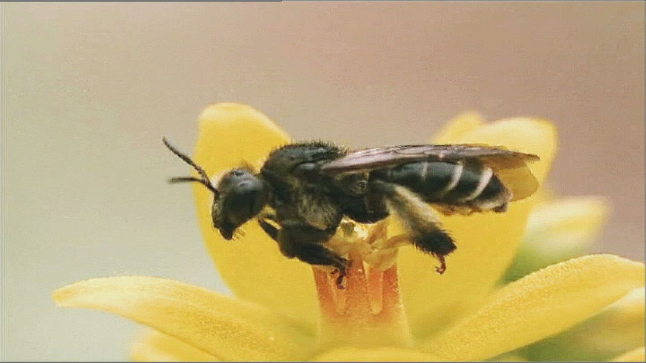 """Superman war gestern! Moderne Superhelden sind klein und haben Flügel: Bienen liefern uns nicht nur das goldgelbe Elixier """"Honig"""" ... - Bildquelle: ProSieben"""