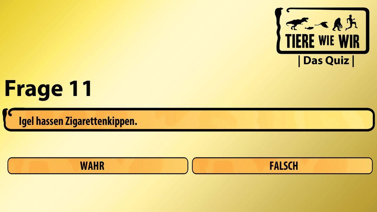 11_Frage_WF_Igel