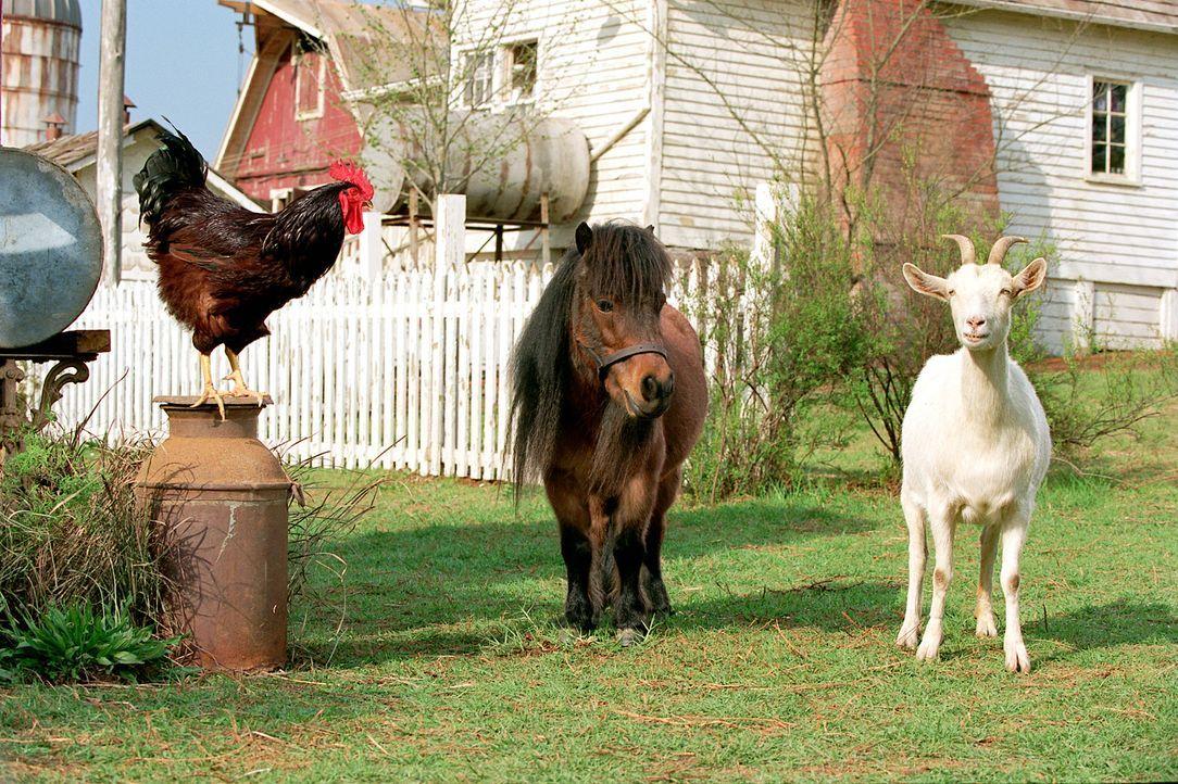 Auch in der Tierwelt kann man auf Unterstützung von Freunden zählen: Reggie (l.), Tucker (M.) und Franny (r.) wollen Stripes bei der Erfüllung se... - Bildquelle: Constantin Film