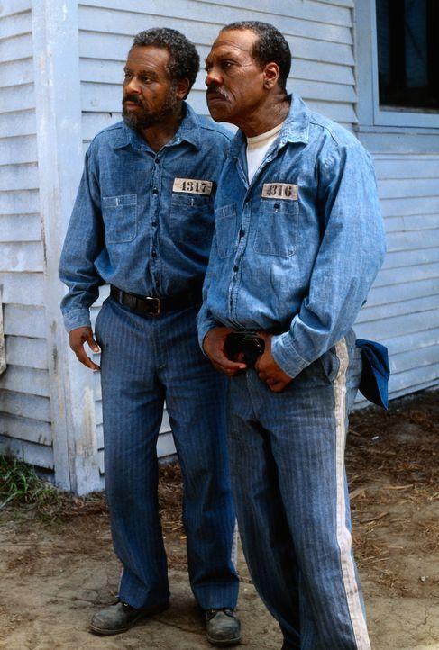 Erst nach 65 Jahren unschuldig hinter Gittern entwickeln Claude (Martin Lawrence, l.) und Ray (Eddie Murphy, r.) den perfekten Ausbruchsplan und bei... - Bildquelle: 1999 Universal Studios. All rights reserved