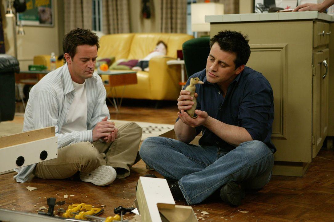 Finden immer eine Gelegenheit für eine Pause: Joey (Matt LeBlanc, r.) und Chandler (Matthew Perry, l.) ... - Bildquelle: 2003 Warner Brothers International Television