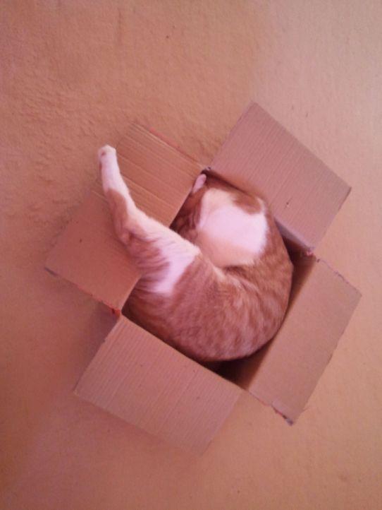 Schlaf-Katze 9