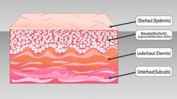 Unsere Haut besteht aus drei Schichten – der Epidermis, der Dermis und der Su...