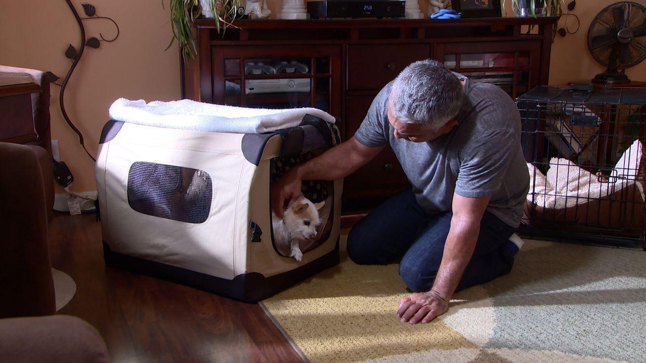 Wird es Cesar (Bild) gelingen, dem ängstlichen Target zu helfen und auch Katy beizubringen, wie sie sich besser in Anwesenheit des Hundes verhalten... - Bildquelle: NGC/ ITV Studios Ltd