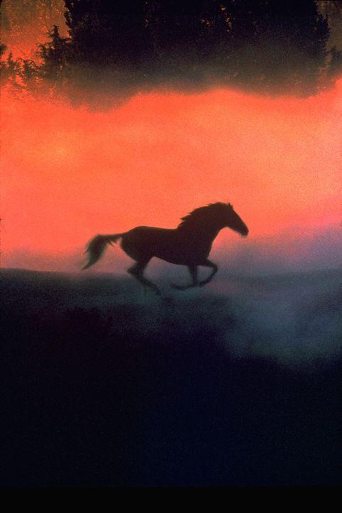 Der Pferdeflüsterer ... - Bildquelle: Elliott Marks Touchstone Pictures