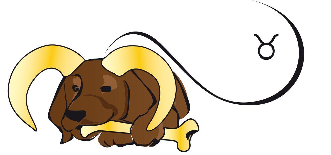 Stierhund Kopie