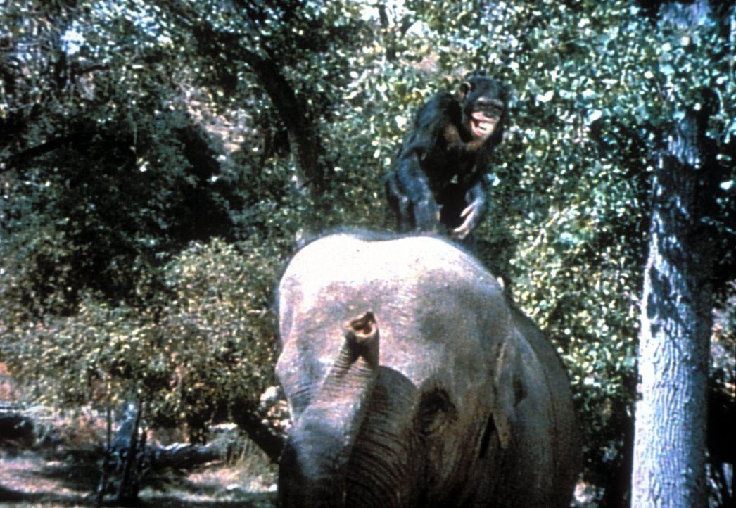 Schimpansenweibchen Judy sorgt Tag für Tag für jede Menge Schabernack ... - Bildquelle: 2007 Warner Bros. All Rights Reserved.