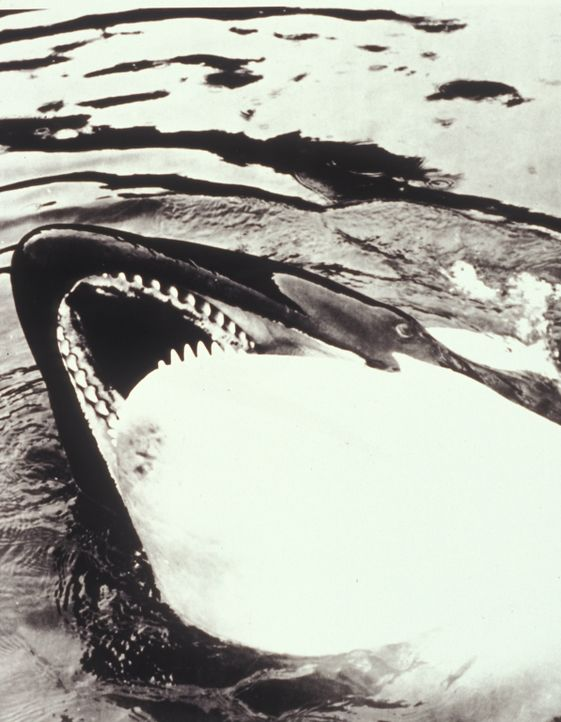 Angriffslustige Haie und Wale rächen sich grausam an Tierquälern ...