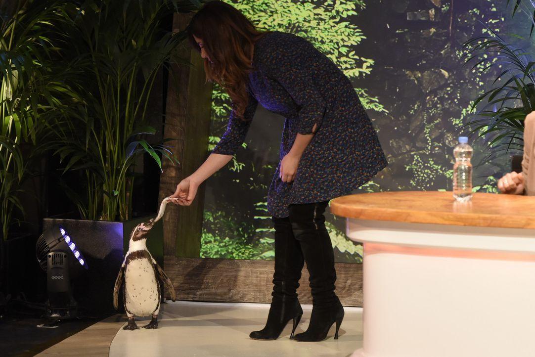 Enissa Amani gibt ihr Bestes, um auch den Pinguin auf ihre Seite zu ziehen ... - Bildquelle: Martin Rottenkolber SAT.1