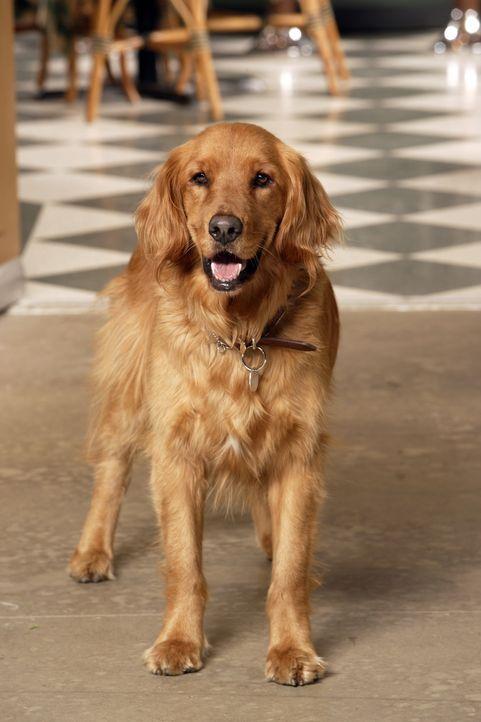 Im Alter von neun Jahren entdeckt Ned eine besondere Gabe: Als er seinen Hund Digby, der von einem Lastwagen überfahren wird, berührt, wird dieser w... - Bildquelle: Warner Brothers