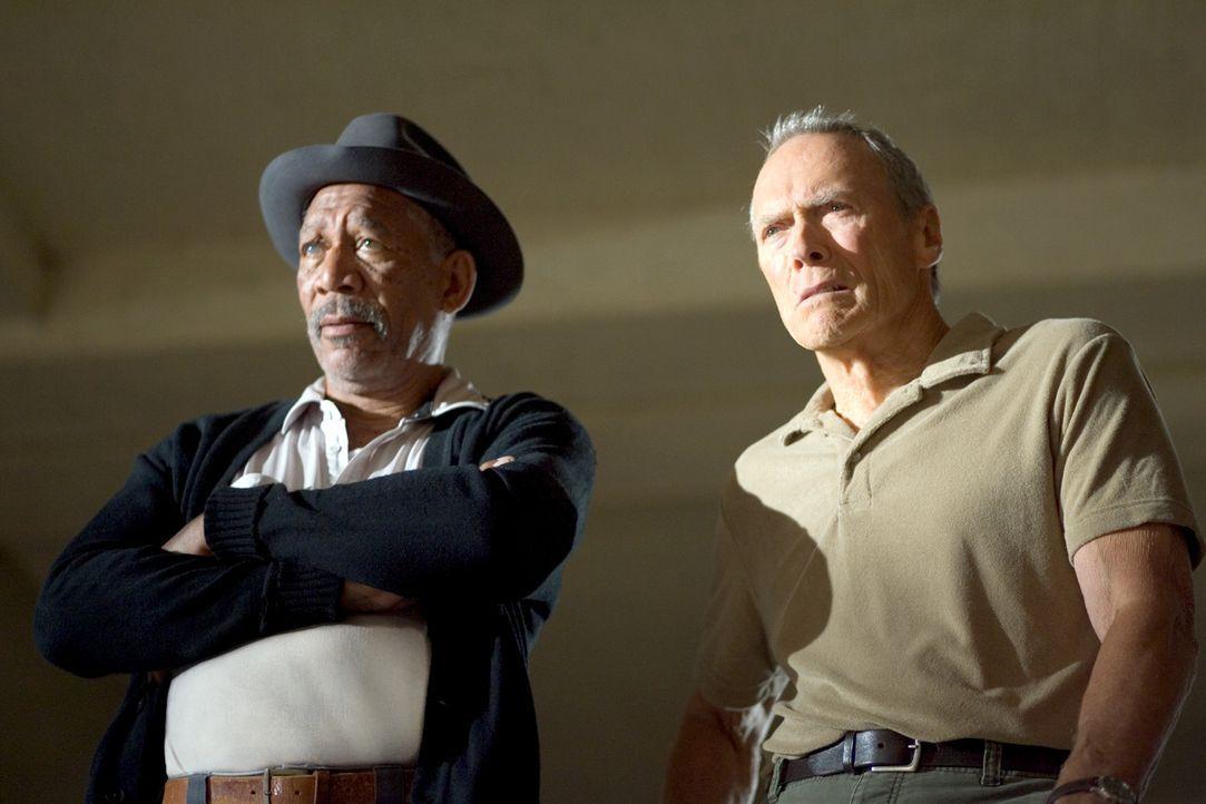 Zunächst erkennt nur Scrap (Morgan Freeman, l.), Hausmeister, Ex-Boxer und Frankies einziger Freund, Maggies Potential. Doch dann sieht auch Frank... - Bildquelle: Epsilon Motion Pictures