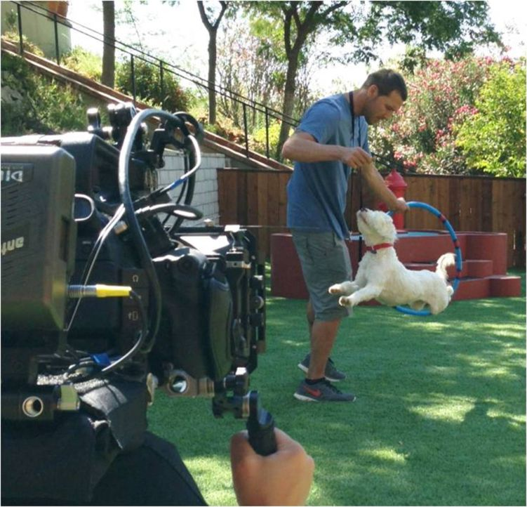 Nachdem Brandon McMillan den Tibet-Terrier Willie gerettet hat, sorgt dieser bei seinen neuen Herrchen für einigen Trubel ... - Bildquelle: Bryan Curb Litton Entertainment 2013