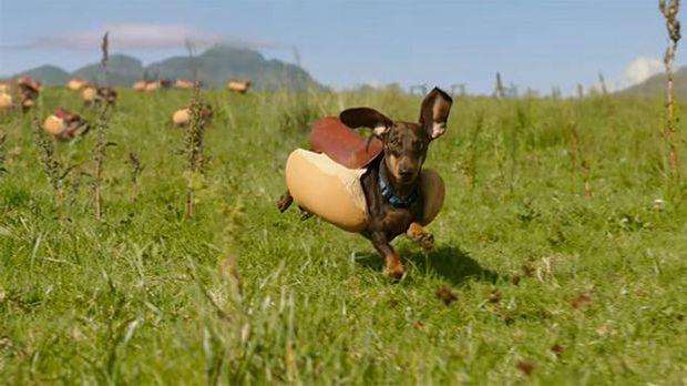 Dieser süße Hund begeisterte als Hot Dog die Zuschauer.