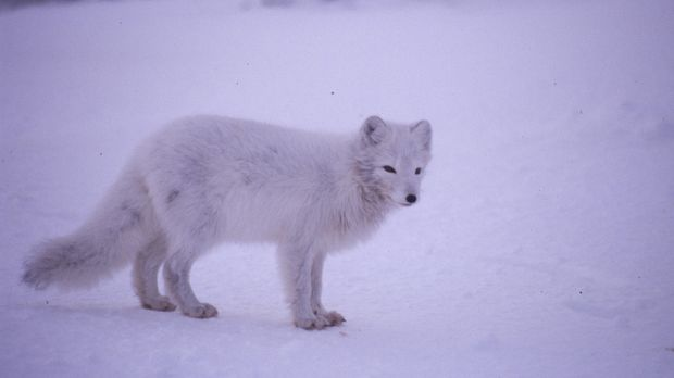 Viele Tiere sind wahre Verwandlungskünstler.