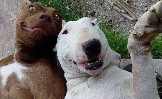 Mehr Hunde - Bildquelle: dailymail.co.uk
