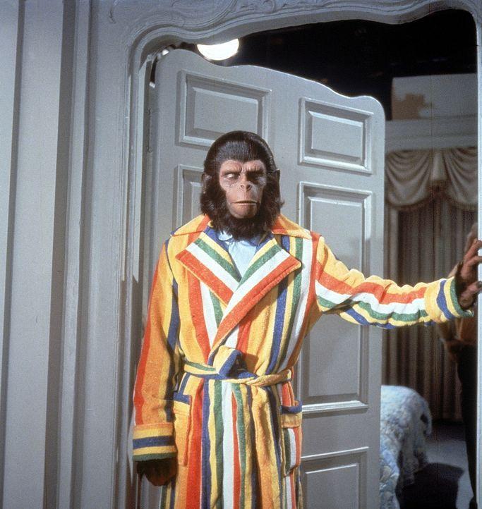 Auf der Erde angekommen, avancieren die sprechenden Affen (Roddy McDowall) bald zur großen Attraktion und zu einem Fall für den amerikanischen Kongr...