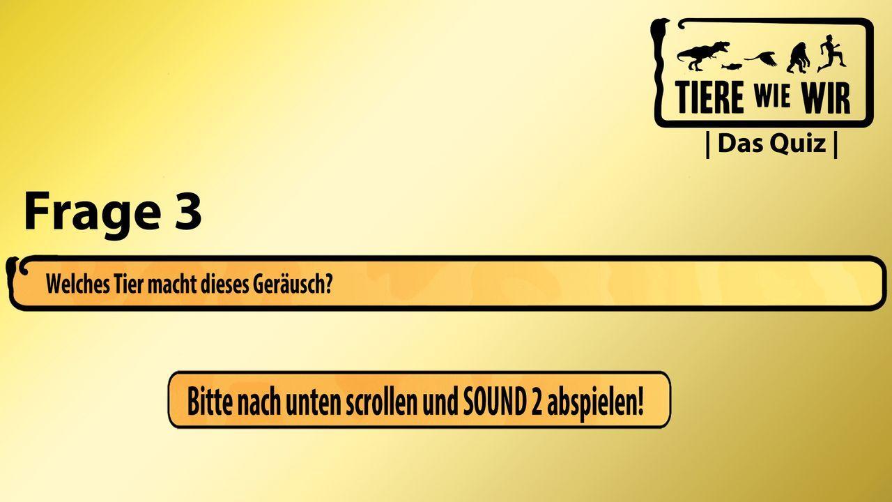 3_Frage_Sound_NEUkorrigiert