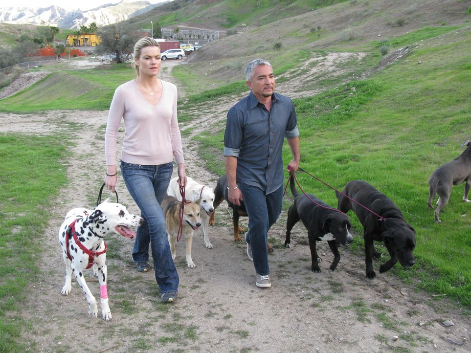 (6. Staffel) - Cesar Millan (r.) ist momentan der berühmteste und gefragteste Experte in Sachen Hundetraining. Aber hier geht es nicht nur darum, Hu... - Bildquelle: Rive Gauche Intern. Television