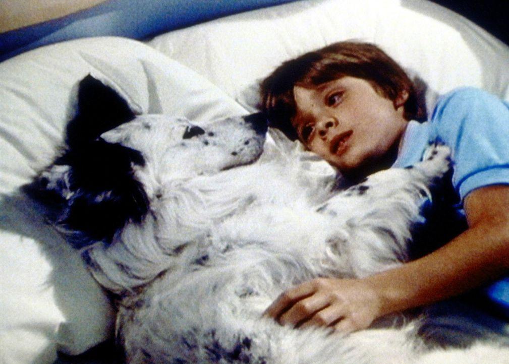 Zwischen Jake und dem Waisenkind Alex (Daniel Pintauro, r.) hat sich eine Freundschaft entwickelt. - Bildquelle: Worldvision Enterprises, Inc.