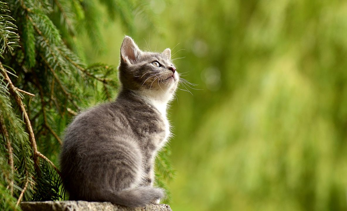 cat-2083492_1920 - Bildquelle: Pixabay