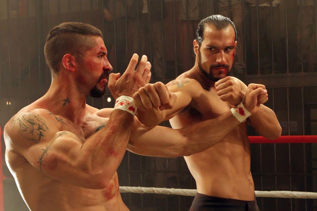 Zwischen Boyka (Scott Adkins, l.) und Dolor (Marko Zaror, r.) beginnt ein Kampf auf Leben und Tod ... - Bildquelle: Nu Image