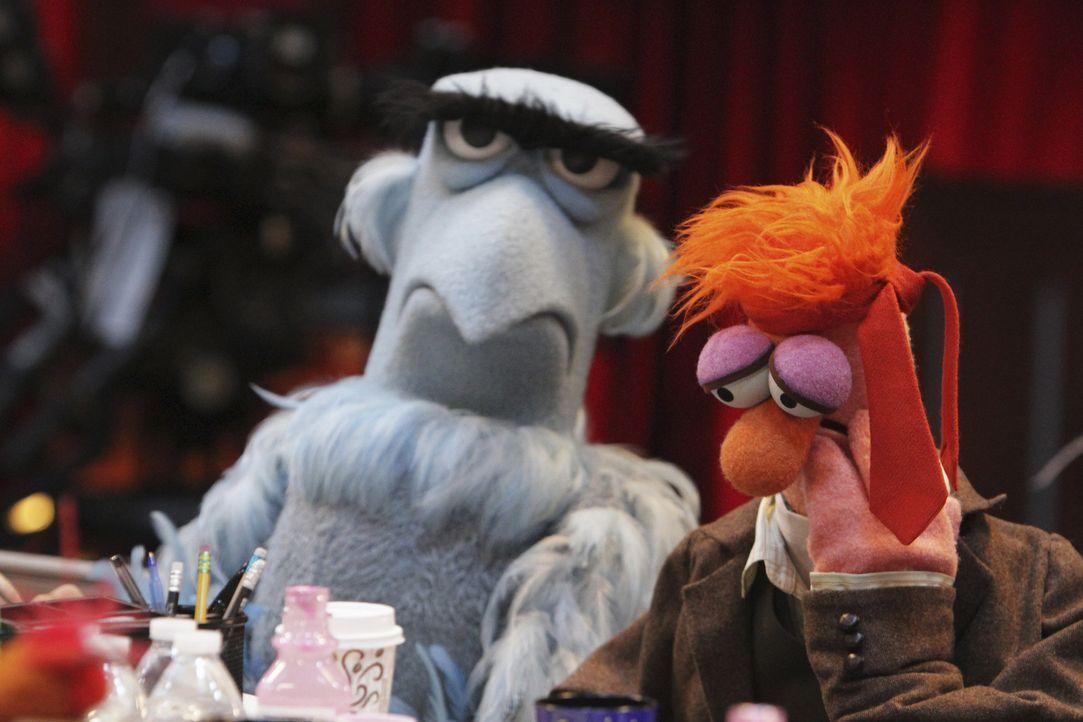 Die durchgezechte Nacht sieht man ihnen noch an: Assistent Beaker (r.) und Sam der Adler (l.) ... - Bildquelle: Andrea McCallin ABC Studios