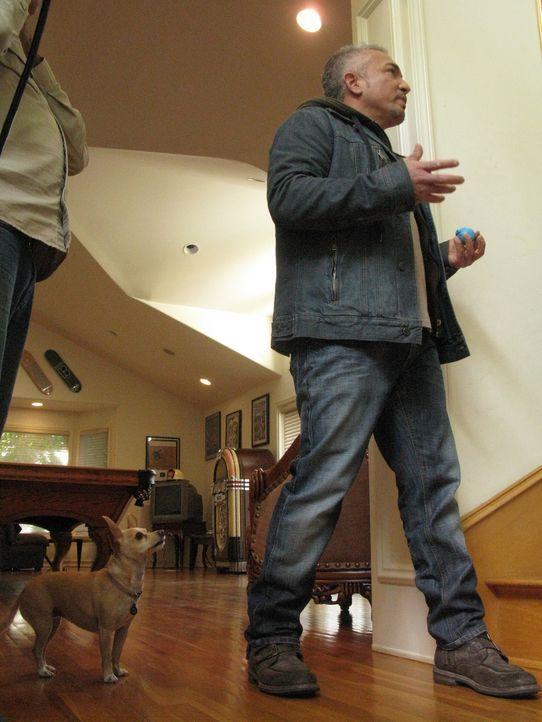 Hunde mit Verhaltensstörungen sind alles andere als eine lustige Angelegenheit. Cesar will heute drei Comedians und deren Vierbeinern helfen. - Bildquelle: MPH - Emery/Sumner Joint Venture