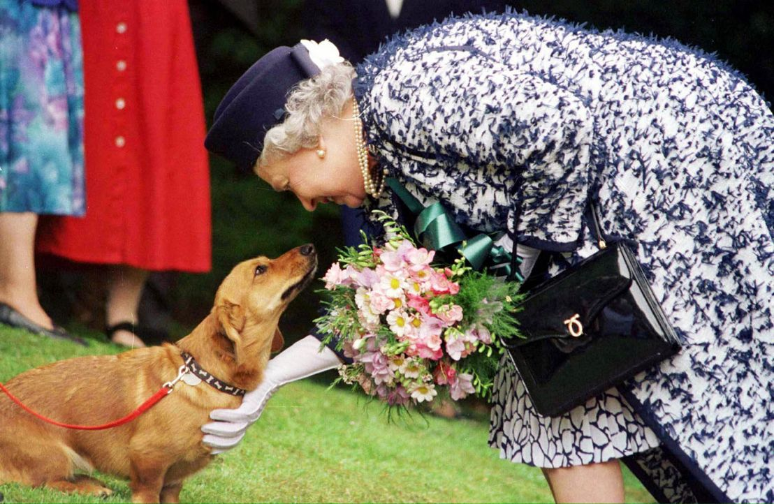 Queen-Elizabeth-II-Hunde-1998-05-20-dpa - Bildquelle: dpa