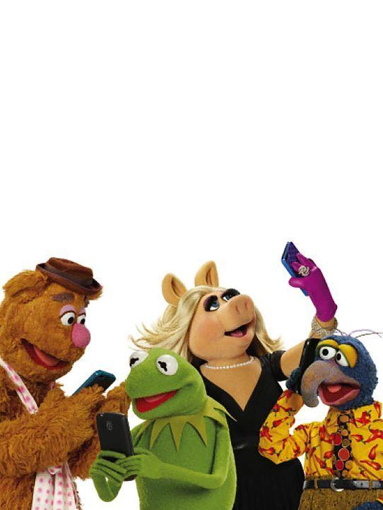 """(1. Staffel) - Die Muppets melden sich mit """"Up Late with Miss Piggy"""" im internationalen Showgeschäft zurück. Mit von der Partie sind Kermit (2.v.l.)... - Bildquelle: ABC Studios"""