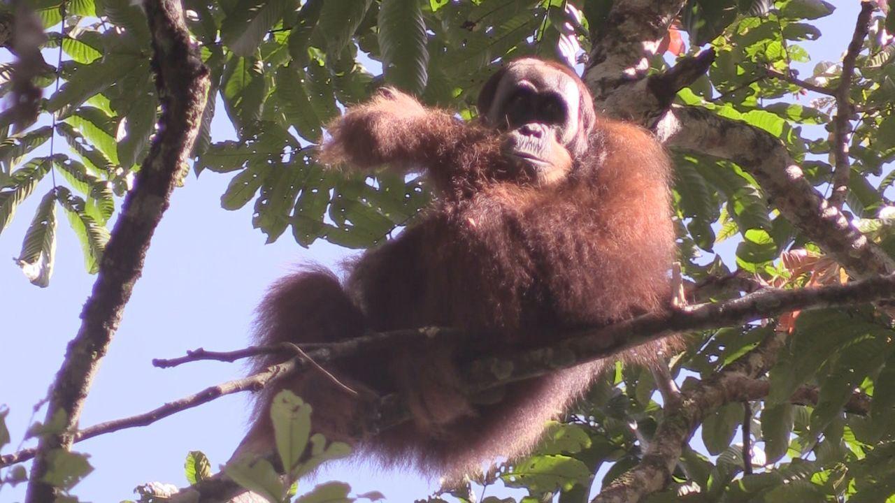 Sumatra 4 - Bildquelle: kabel eins