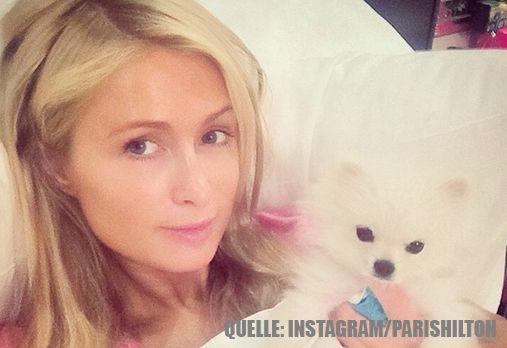 Paris Hilton_HundImBett