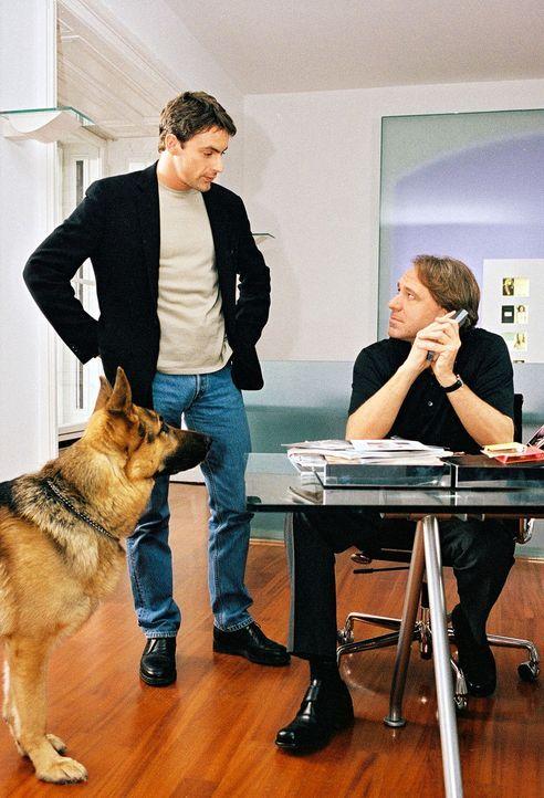 """Kommissar Brandtner (Gedeon Burkhard, l.) und Rex befragen Pit Gallauer (Gerd Silberbauer, r.), den Chef der Modelagentur, aus dessen """"Stall"""" das er... - Bildquelle: Ali Schafler Sat.1"""