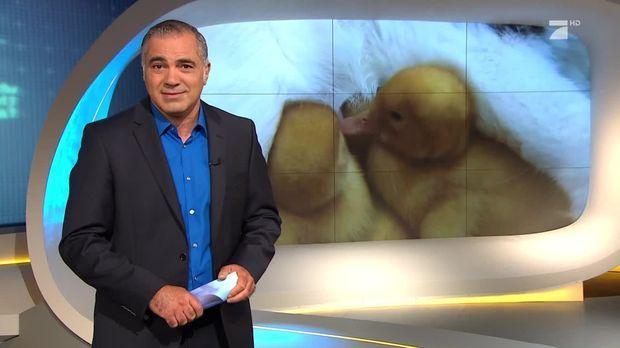Galileo - Galileo - Freitag: Können Tiere Genauso Lieben Wie Wir Menschen?
