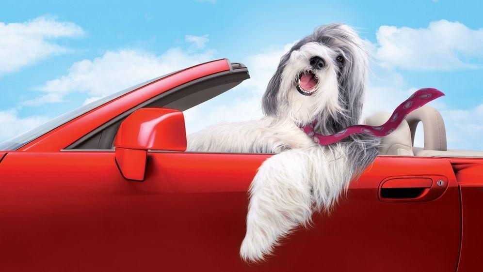Shaggy Dog - Hör mal, wer da bellt - Bildquelle: Disney Enterprises, Inc. All rights reserved