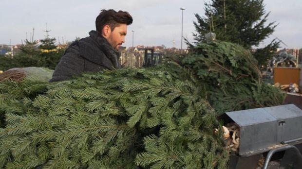 Wer verdient am Weihnachtsbaum