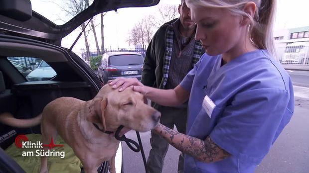 Klinik Am Südring - Klinik Am Südring - Auf Den Hund Gekommen