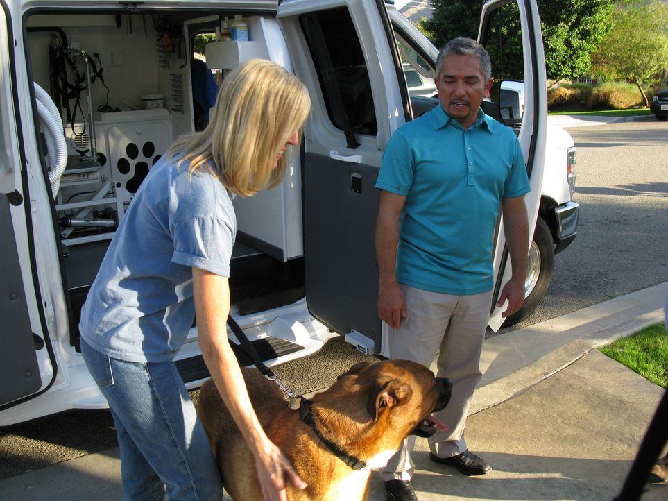 Die Hundestylistin Lauren (l.) braucht dringend die Hilfe von Hundeflüsterer Cesar Millan (r.) ... - Bildquelle: Rive Gauche Intern. Television