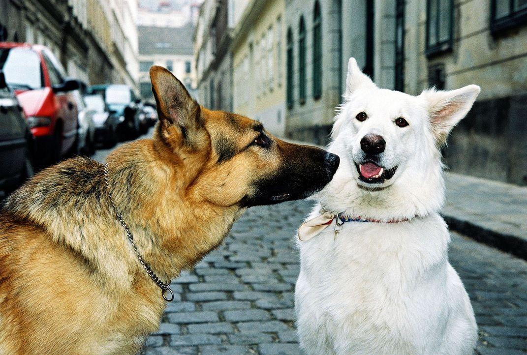 Rex findet einen neuen Freund... - Bildquelle: Sat.1