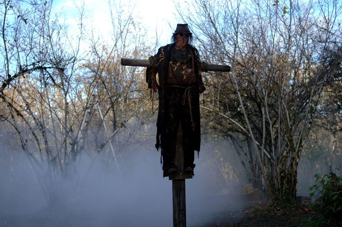 Die Vogelscheuche (Mike Carpenter) erhält ihre Kraft durch einen alten Baum. Sean und Dean machen sich auf, den Baum zu vernichten ... - Bildquelle: Warner Bros. Television