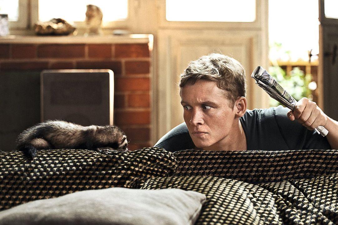 Felix (Matthias Schweighöfer) wird Opfer eines böswilligen und bissigen Frettchens, das ihm seiner Zeugungsfähigkeit beraubt. Nun gibt es nur noch e... - Bildquelle: 2013 Warner Brothers