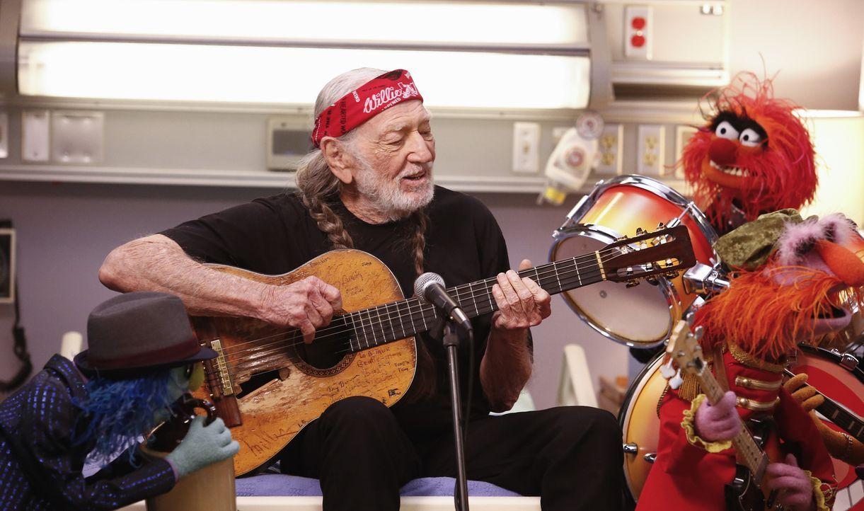 Willie Nelson (2.v.l.) tritt zusammen mit Zoot (l.), Tier (r.) und Floyd Pepper (2.v.r.) in Miss Piggys Show aus dem Krankenhaus auf ... - Bildquelle: ABC Studios