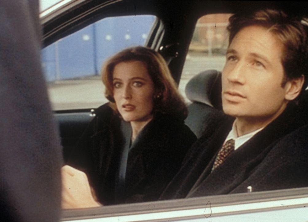 Mulder (David Duchovny, r.) und Scully (Gillian Anderson, l.) sind nach San Diego gereist, um ein französisches Bergungsschiff zu inspizieren, desse... - Bildquelle: TM +   2000 Twentieth Century Fox Film Corporation. All Rights Reserved.