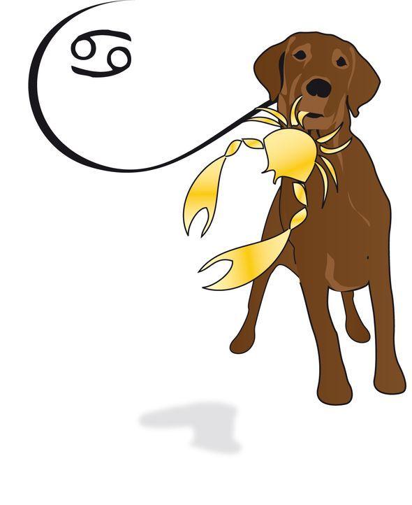 Krebshund Kopie