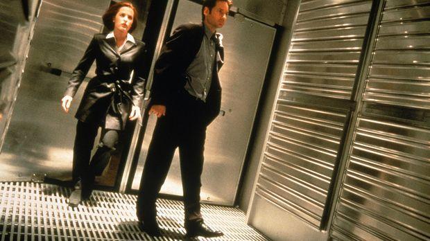 Die FBI-Agenten Scully (Gillian Anderson, l.) und Mulder (David Duchovny, r.)...