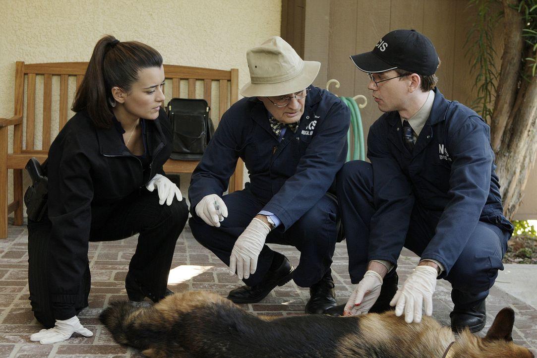 Kümmern sich um den Schäferhund, den McGee in Notwehr angeschossen hat: Ziva (Cote de Pablo, l.), Ducky (David McCallum, M.) und Jimmy (Brian Diet... - Bildquelle: CBS Television