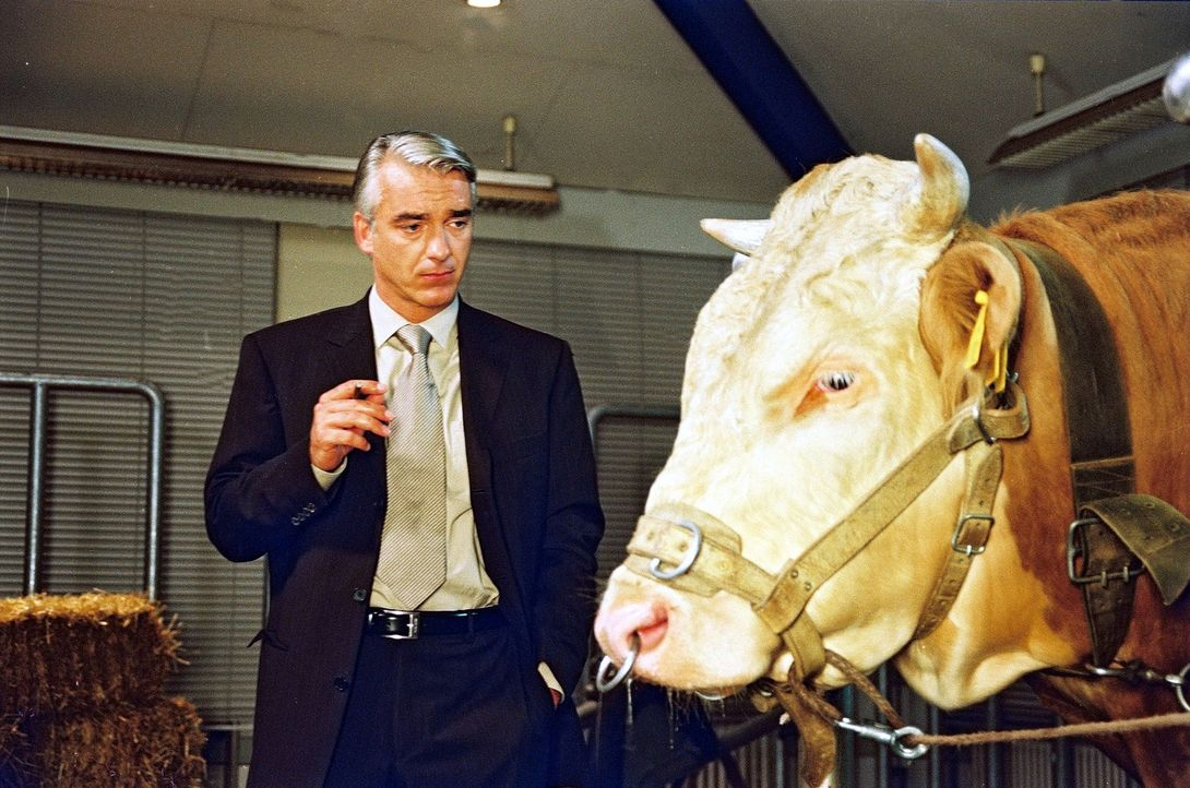 Felix (Christoph M. Ohrt) ist völlig perplex, als er entdeckt, dass sein geliebter Stier sprechen kann ... - Bildquelle: Hardy Spitz Sat.1